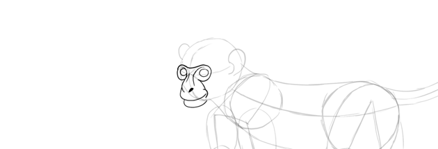 monkey drawing eyes details