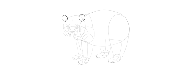 panda drawing ears shape