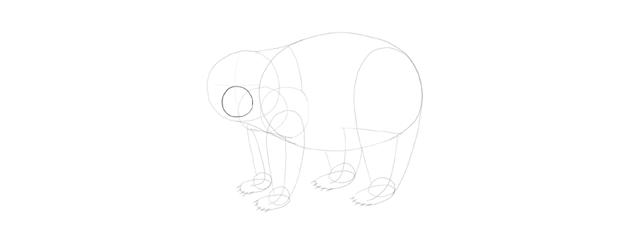 panda drawing muzzle circle