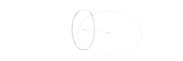 elephant shoulder oval