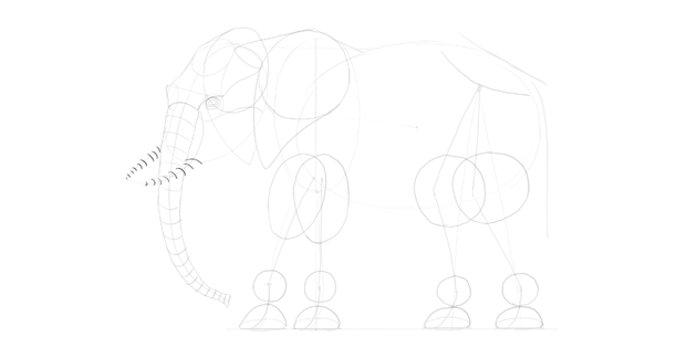 elephant tusks draw