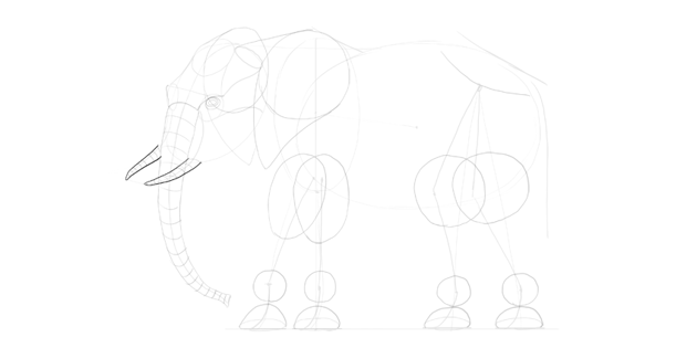 elephant tusks outline