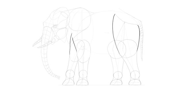 elephant upper legs