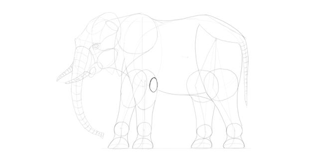 elephant elbow