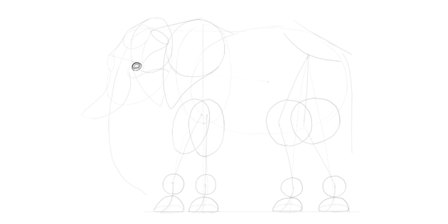 elephant eye shape