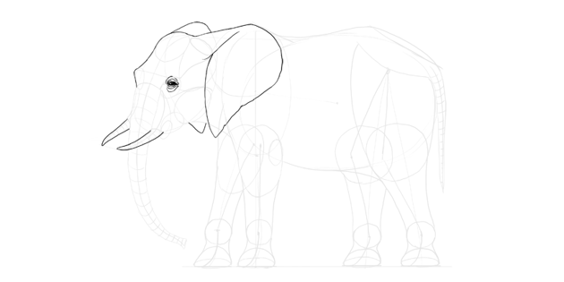 elephant tusks detail