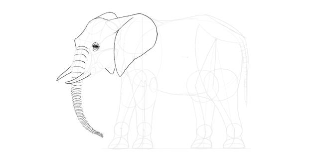 elephant trunk detail