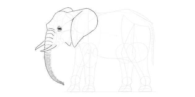 elephant trunk wrinkles