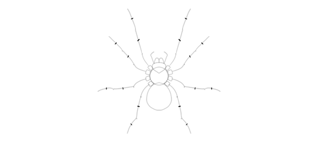spider drawing more leg sections
