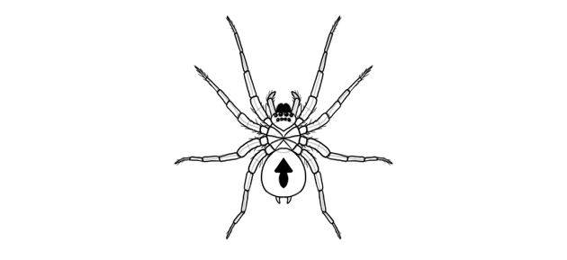 spider drawing finished