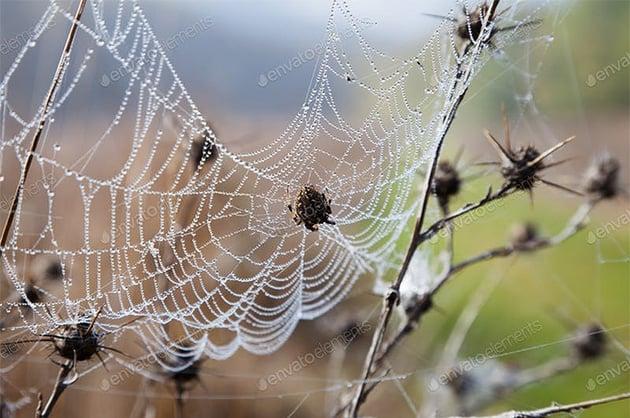 spider web photo dew