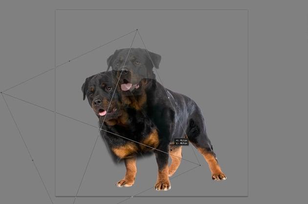 photoshop size modification