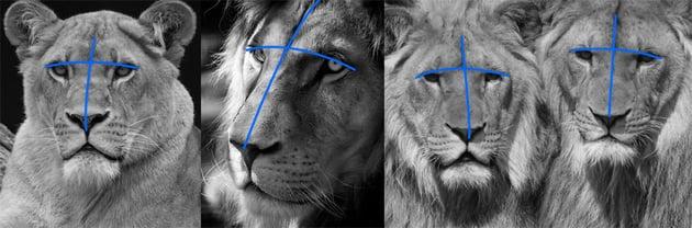 lion head drawing cross