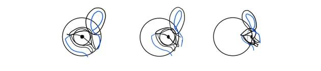 lion eye details rotation