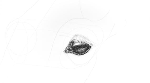 horse upper eyelid shading
