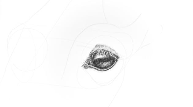 horse upper eyelid detailed shading