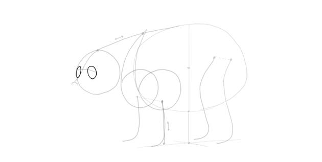 bear drawing eye sockets