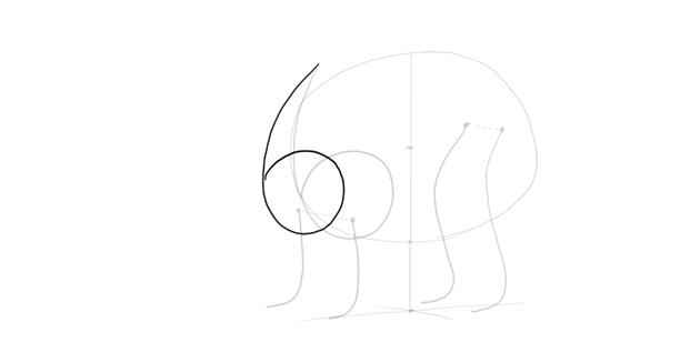 bear drawing shoulder mass