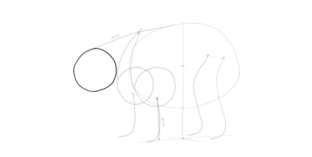 bear drawing round head