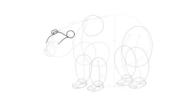 bear drawing ears