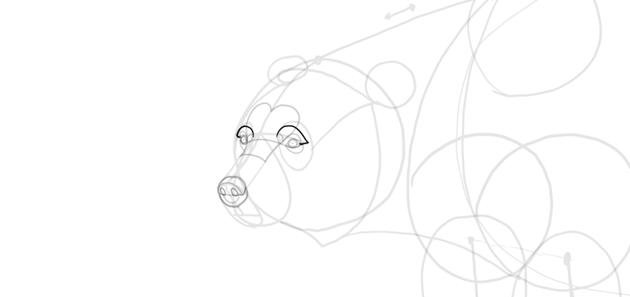 bear drawing full eyebrows