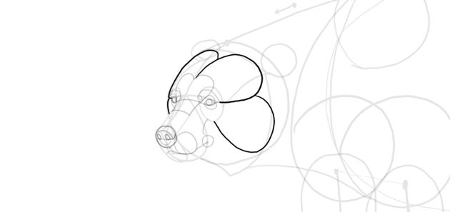 bear drawing head shape