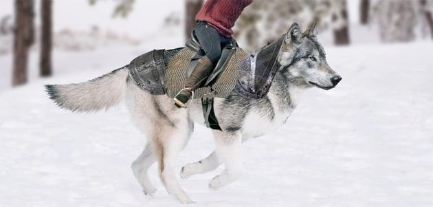put armor on wolf back