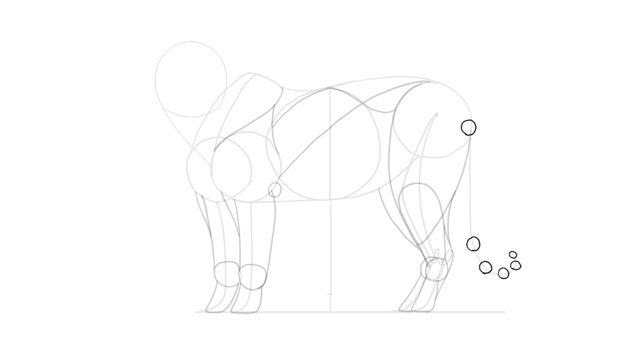 sketch the tails width