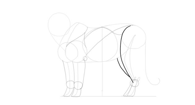 sketch the hind leg