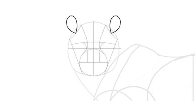 sketch the ears