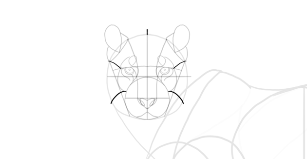 sketch fur around face