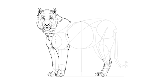 draw the tiger forelegs