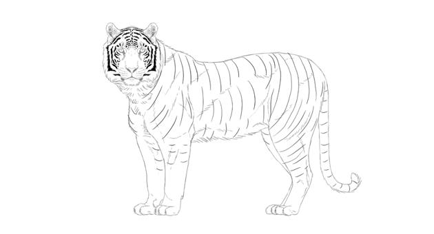 how tio draw tigers stripes