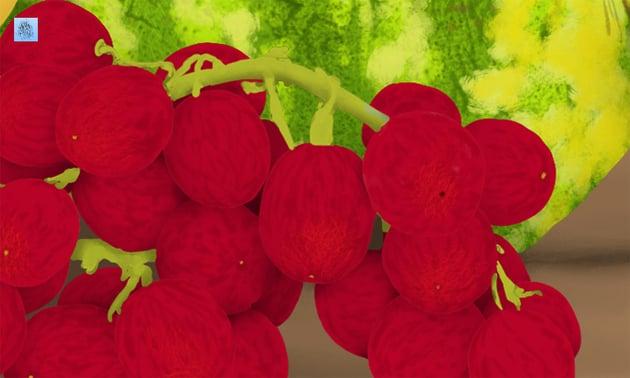 grapes details