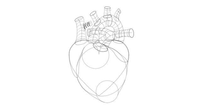 draw 3d shape of side of vena cava