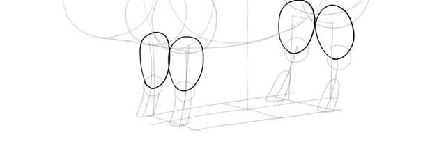 draw pig leg muscles