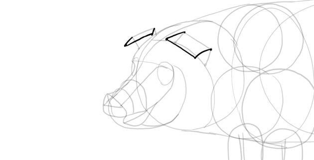 draw pig ears middle