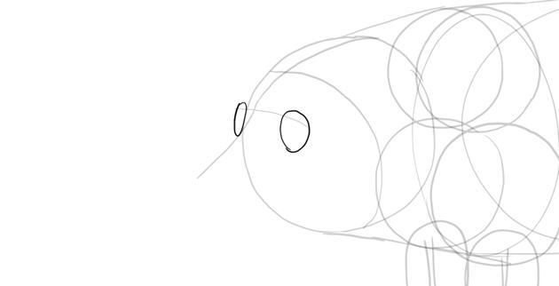 sketch pig eye sockets
