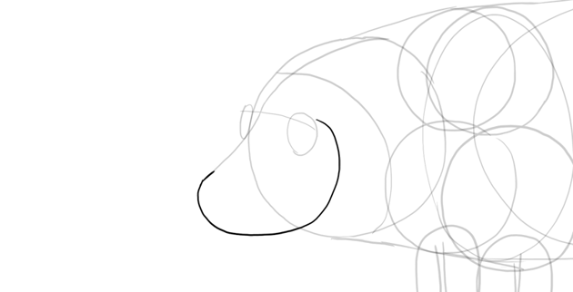 sketch pig snout