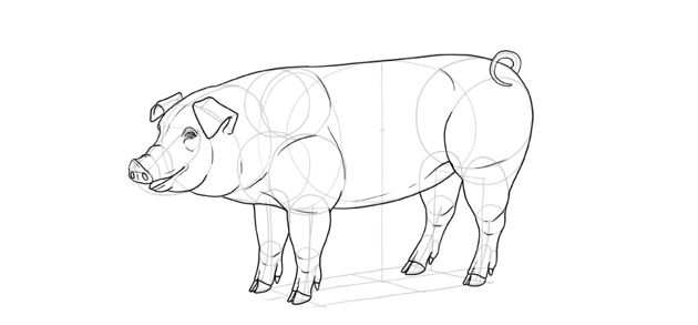 add detail to pig body