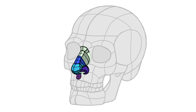 3d forms of the nose