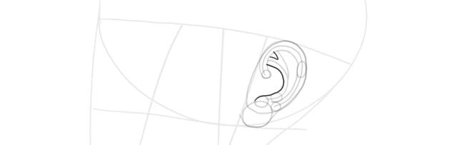 ear side view antihelix full
