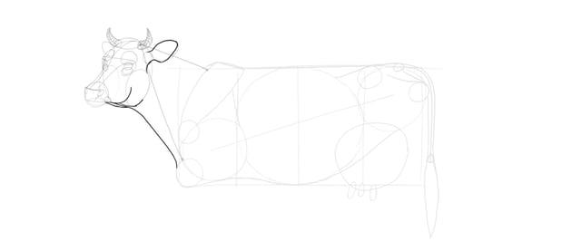 draw cow neck