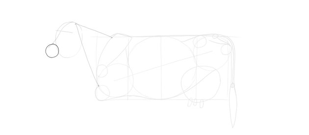 draw cows oval muzzle