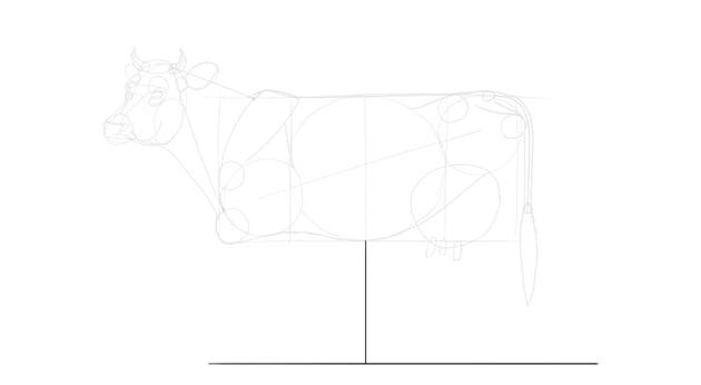 draw cow leg length