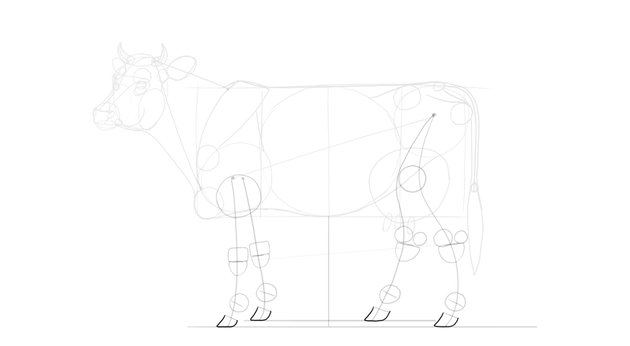 draw cow hooves