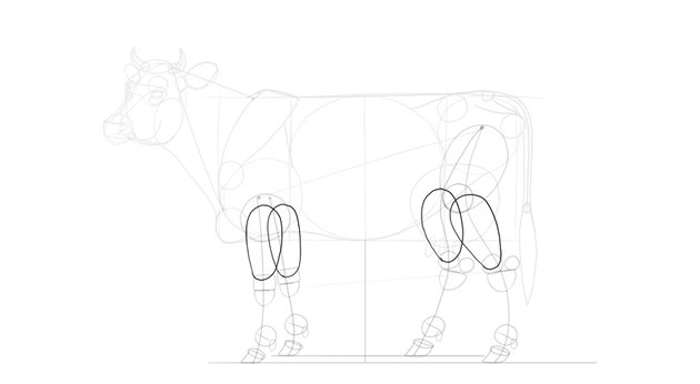 draw cow muscles