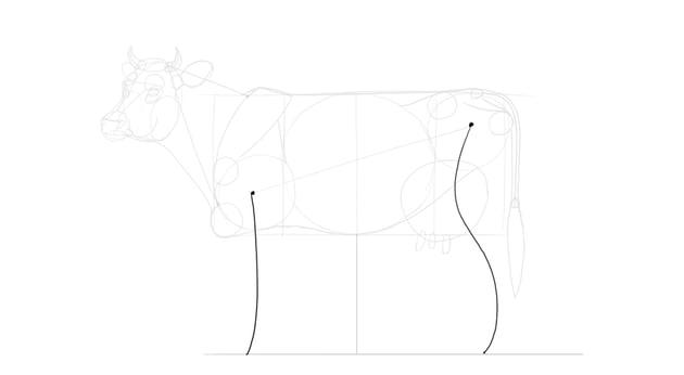sketch cow limbs