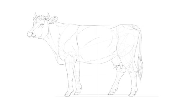 draw cow lines