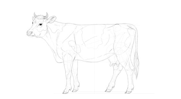 draw cow pattern
